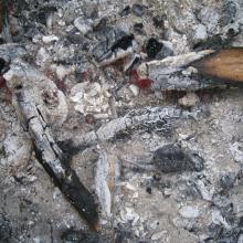 carbon dating chicken bone