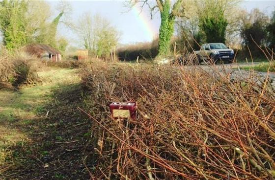 Hedge laying introduction